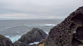 在一个岩石的美丽的地衣在北海的岸 免版税图库摄影