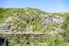 在一个岩石的花,在瑞典斯堪的那维亚北部欧洲 免版税库存图片