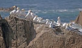 在一个岩石的鸟在夏天 图库摄影