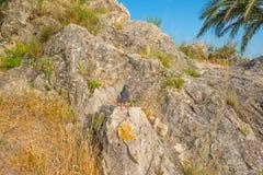 在一个岩石的鸽子在阳光下在夏天 库存图片