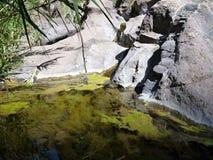 在一个岩石的绿色水池在小小河 免版税库存照片