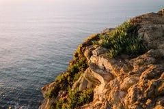 在一个岩石的绿草在岸,葡萄牙 免版税库存图片