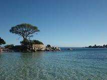 在一个岩质岛上的孤零零树在可西嘉岛,法国 图库摄影