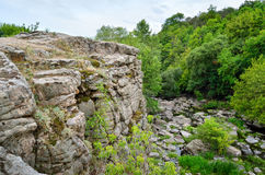 在一个峡谷的绿色树反对多云天空背景 免版税图库摄影