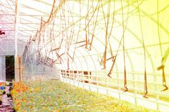 在一个工业规模的灌溉系统自温室,生长植物 图库摄影