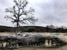 在一个巨型岩石顶部的唯一树 免版税库存照片