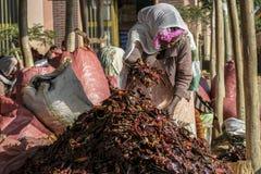 在一个市场上的红辣椒在埃塞俄比亚 免版税库存图片