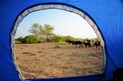 在一个帐篷外面的看法在阿曼 免版税库存图片