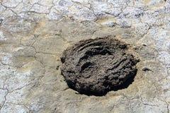 在一个干泥滩的干水牛排汇物 库存图片