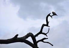 在一个干燥分支的鸟 库存图片