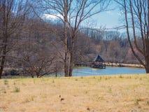 在一个平安的湖的美好的结构 库存图片