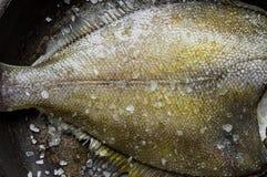 在一个平底锅的新近地被捉住的异体类有盐的 免版税库存图片