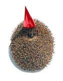 在一个庆祝的盖帽的森林猬 库存照片