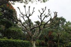 在一个庭院中间的老树有多云天空的 免版税图库摄影