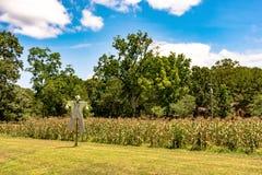 在一个庭院前面的稻草人在夏天 库存图片