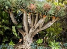 在一个庭院的仙人掌树威尼斯海滩的,洛杉矶, LA,加利福尼亚,加州 库存照片