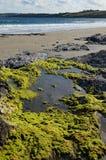 在一个康沃尔海滩的岩石水池 免版税库存图片
