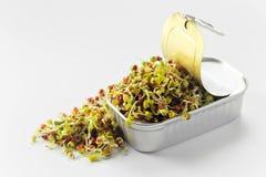 在一个开放罐头的发芽的种子 免版税库存照片