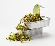 在一个开放罐头的发芽的种子 图库摄影