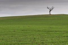 在一个开放领域的偏僻的树 免版税库存图片