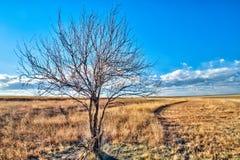 在一个开放领域的偏僻的树 免版税库存照片