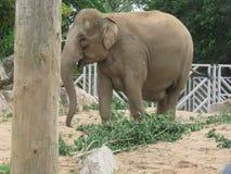 在一个徒步旅行队公园的一头大象在英国 免版税库存照片