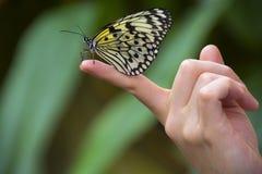 在一个手指的蝴蝶有被弄脏的背景 库存图片