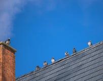 在一个教会屋顶的鸽子在一寒冷冬天天 免版税库存照片