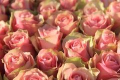 在一个新娘安排的桃红色玫瑰 免版税库存照片
