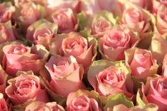 在一个新娘安排的桃红色玫瑰 免版税库存图片