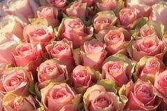 在一个新娘安排的桃红色玫瑰 库存图片