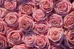 在一个新娘安排的桃红色玫瑰 免版税图库摄影