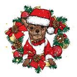 在一个新年` s花圈的一条美丽的狗与球和弓 也corel凹道例证向量 新年` s和圣诞节 免版税库存照片