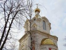 在一个新的教堂的背景的桦树在市的中心克拉斯诺达尔 免版税库存照片