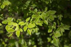 在一个春日的绿色叶子 库存图片