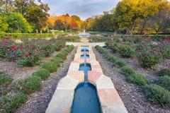在一个晚秋天下午的玫瑰园 免版税库存图片