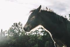在一个晴天的马 免版税库存图片