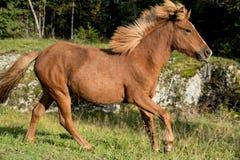 在一个晴天的马 免版税图库摄影