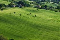 在一个晴朗的下午的象草的小山在意大利 免版税库存图片