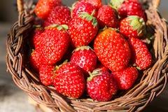 在一个晴朗的在篮子的早晨新鲜的草莓 库存图片