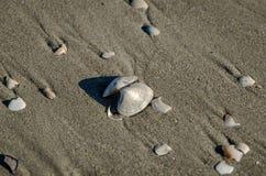 在一个晴朗的海滩的沙子的壳 免版税库存图片