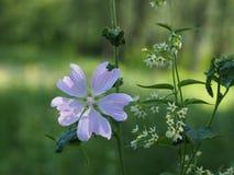 在一个晴朗的草甸,一朵不可思议的花 免版税库存照片