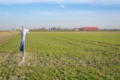 在一个最近被播种的荷兰领域的稻草人在开拓地 库存照片
