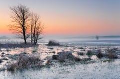 在一个有薄雾和湿软的草甸的冷淡的清早有冻水和一棵偏僻的树的 库存照片
