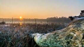 在一个有薄雾的池塘的日出有在前景的说谎的树干的 库存图片