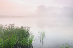 在一个有薄雾的池塘的日出 库存图片
