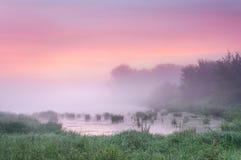 在一个有薄雾的池塘的日出 免版税库存照片