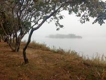 在一个有薄雾的湖边缘的树 库存图片