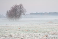 在一个有薄雾的草甸的冷淡的清早有偏僻的小组的树 免版税库存图片