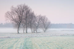 在一个有薄雾的草甸的冷淡的清早有偏僻的小组的树 库存图片